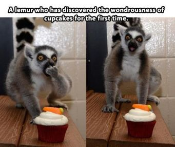 funny-a-lemur-who-has-discovered-the-wonderousness-of-cupcakes-for-the-first-time-01